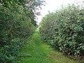 Railway Walk, Clare Country Park - geograph.org.uk - 979731.jpg