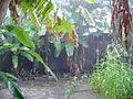 Rain season in Mayotte (2851351872).jpg