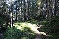 Ranebo naturskog 2015 gångstig.JPG