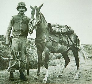 Sergeant Reckless - Reckless with her primary trainer, Platoon Gunnery Sergeant Joseph Latham
