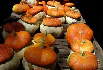 Red hat pumpkins
