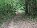 Repaired footpath in Sandpits Wood - geograph.org.uk - 1344915.jpg