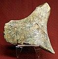 Replica di frammento osseo rupestre con cavallo, della grotta paglicci di rignano garg., epigravettiano evoluto, 16000-14000 ac (vr, museo storia naturale).jpg