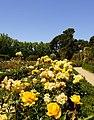 Retiro Park in Madrid - Rosengarten - 12.jpg