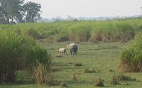 Nationalpark Kaziranga