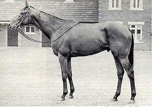 Ribot (horse) - Image: Ribot (GB)
