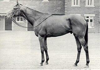 Ribot (horse)