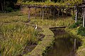 Rice paddy (2097337794).jpg