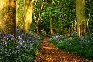 The Ridgeway - The Ridgeway in Grim's Ditch near Mongewell