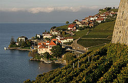 Rivaz-Dorf.jpg