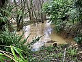 River Arun at Nuthurst Sussex in flood Feb 2020.jpg