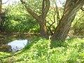 River Lyubushka3.JPG
