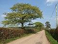 Road at Week Cross - geograph.org.uk - 2406574.jpg