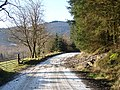 Road into Hafren Forest - geograph.org.uk - 1113834.jpg