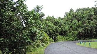 Wooroonooran, Queensland - Road to Josephine Falls, Wooroonooran National Park, Wooroonooran, 2018