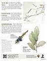 Rock Creek Trail Guide Page 2 (7161645154).jpg