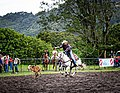 Rodeo Event Calf Roping 17.jpg