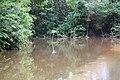 Roman Forest Flood, 4-19-16 at 2-30 PM (25926196643).jpg
