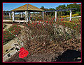 Rose gardens.jpg