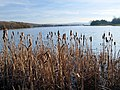 Rother Valley Country Park - geograph.org.uk - 683419.jpg
