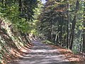 Route forestière Herrgauchamps 1 - panoramio.jpg