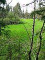 Ruine Baltenstein GO-5.jpg