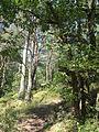 Saint-Pierre-lès-Nemours (77), le Mont Sarrasin par le GR 13, sens est-ouest 5.JPG