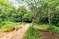 Samaná Province, Dominican Republic - panoramio (136).jpg