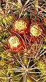 San Diego Cactus Flower.jpg