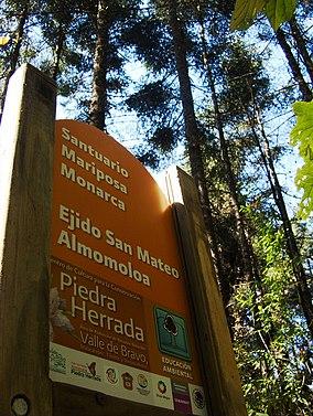 Santuario de la Mariposa Monarca (3088019191).jpg