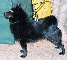 Gifts for Schipperke Dog Lovers