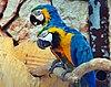 Schläfrige Gelbbrustaras (sleepy Blue-and-yellow Macaws) Weltvogelpark Walsrode 2010.jpg