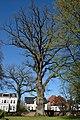 Schleswig-Holstein, Pinneberg, Naturdenkmal 03-07 NIK 2480.JPG
