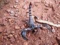 Scorpion (7).jpg