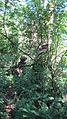 Sendero a la primera cascada de reserva Aguas Chiquitas - panoramio.jpg