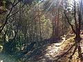 Sentiero presso le gole di Celano.jpg