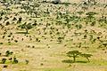 Serengeti, Tanzania - panoramio (30).jpg