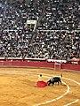 Sergio Flores torero - Plaza Mexico.jpg