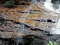 Setrock Creek Falls Black Mountain Campground Pisgah Nat Forest NC 4396 (37947703631).jpg
