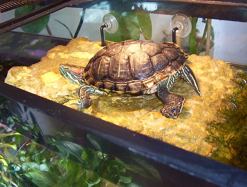 Turtle Tank Decoration Ideas