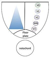 plaquenil ilaç etkileşimleri