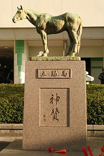Shinzan Japanese-bred Thoroughbred racehorse