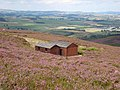 Shooting cabins, Whitefield Hill - geograph.org.uk - 541327.jpg