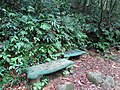 Sinharaja Forest sitting area.JPG