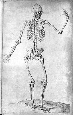 Skeleton from Compendium Anatomicum. Wellcome L0023923
