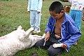 Skinning of goat 2.jpg