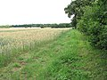 Skirting a field's edge - geograph.org.uk - 1405670.jpg