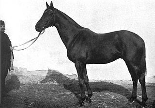 Slieve Gallion (horse) British-bred Thoroughbred racehorse