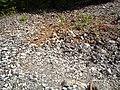 Smältarmossgruvan 09.jpg
