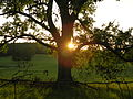 Smithville Sunset.JPG